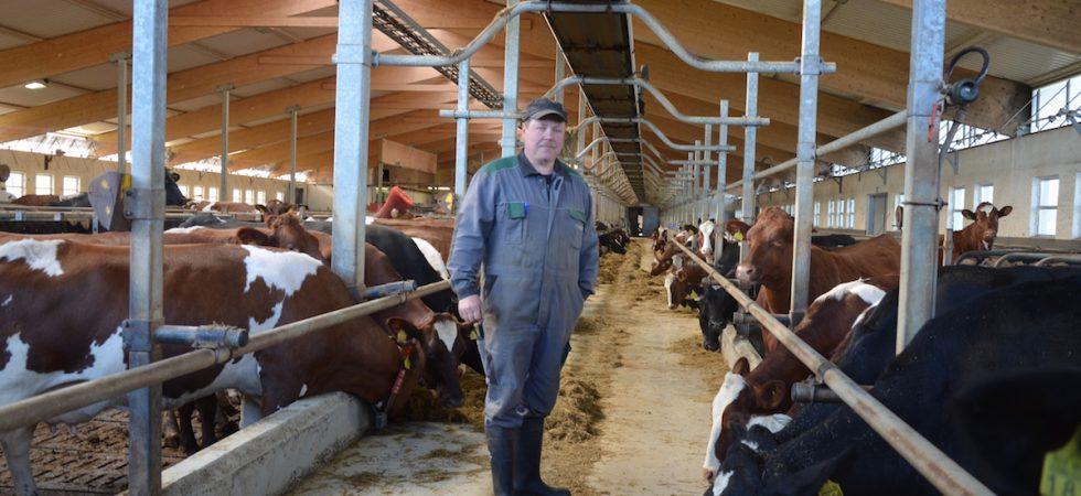 Aamutoimet navetassa on tehty ja lehmät ovat tyytyväisiä. Ilpo Wennström sanoo, että periksi ei saa antaa.