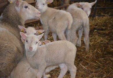 Lampurit koolla Toholammilla